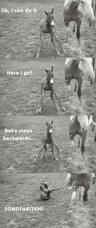 This little one better watch it's mouth or mama will borrow the saddle soap.