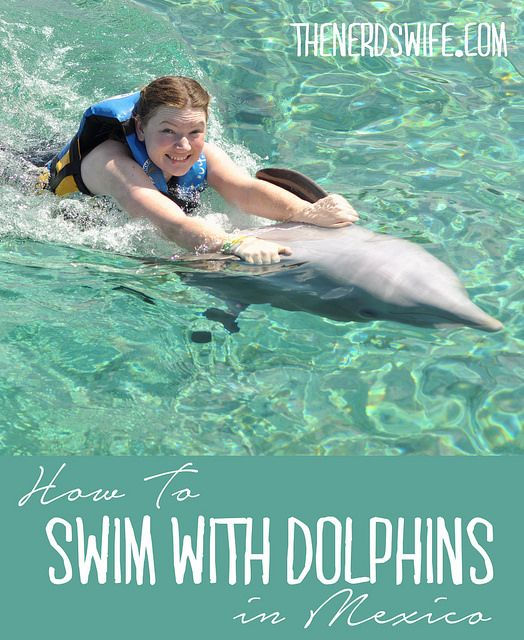 Swim with the Dolphins in Mexico at the Dolphin Push, Pull, and Swim Excursion at Chankanaab Park in Cozumel, Mexico #SeasTheDay