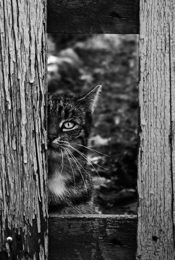 #cat out of the #door