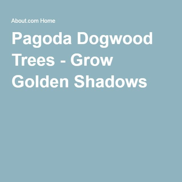 Pagoda Dogwood Trees - Grow Golden Shadows