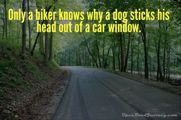 Motorcycle Quote We Love Only A Biker Knows Why A Dog