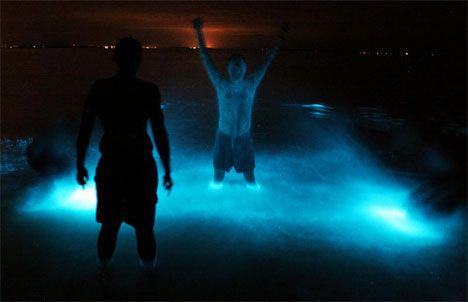 Gippsland Lakes, in Victoria, Australia, are bioluminescent