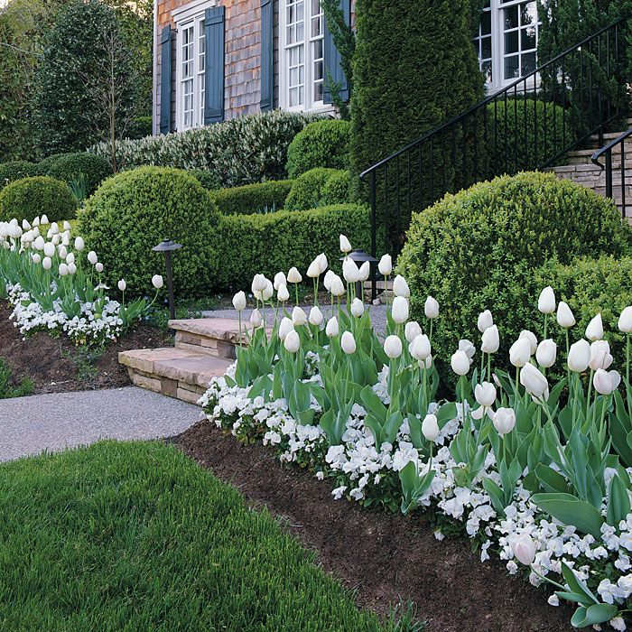 This is my favorite! Plant tulip bulbs and then a thick bed of pansies over them. When the tulips break through it is truly beautiful and southern. One of my favoroites!: