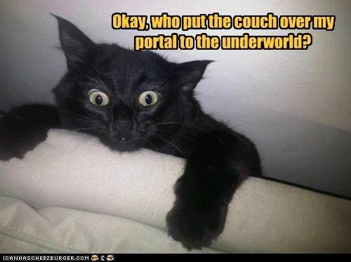 Basement Cat!