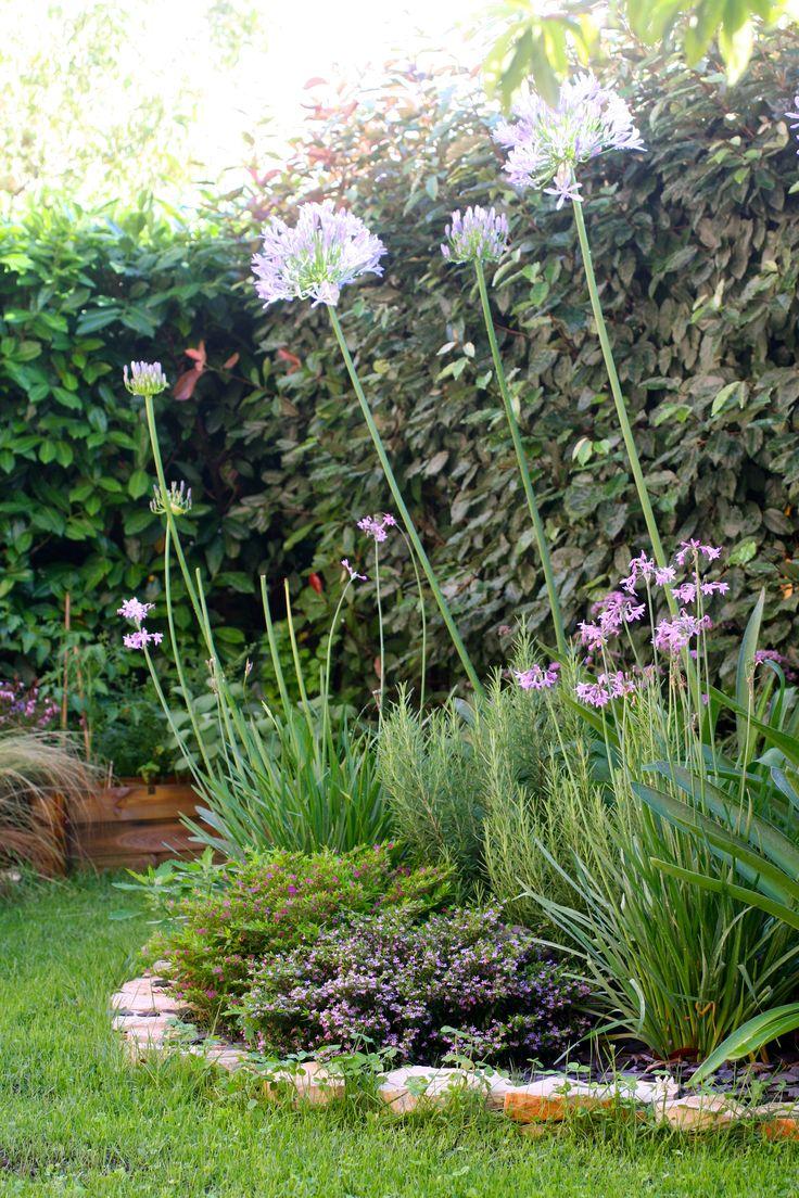 bordura fiorita in giardino privato