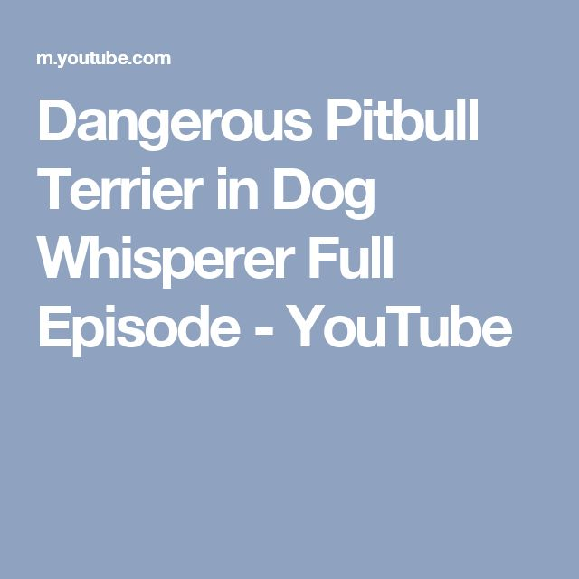 Dangerous Pitbull Terrier in Dog Whisperer Full Episode - YouTube