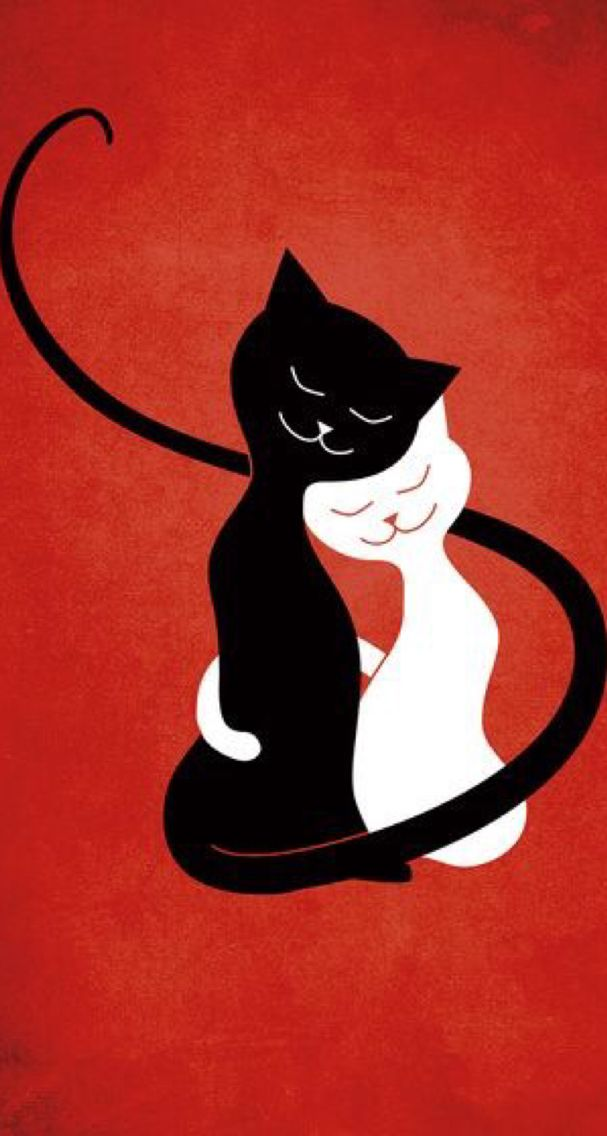 23 besten Gatinhos Bilder auf Pinterest | Kätzchen, Schwarze katzen ...
