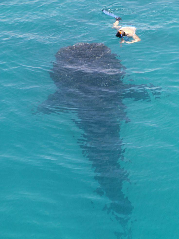Jan'18: Malediven - In den tiefen Süden mit der Carpe Vita #born2dive #oceanlovers #scubakids #wirodive #tauchreisen #erlebnisreisen #tauchen #malediven #carpevita #tauchsafari #mantas #walhaie #meer #sonne #willweg #urlaub #traum