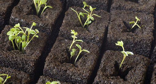 Předpěstování sadby za oknem: vhodný substrát, sadbovací tablety, miniskleníky…