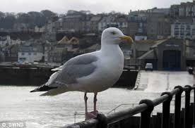 Bildergebnis für seagull