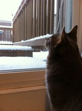 How to Keep Your Indoor Cats Comfortable During the Winter