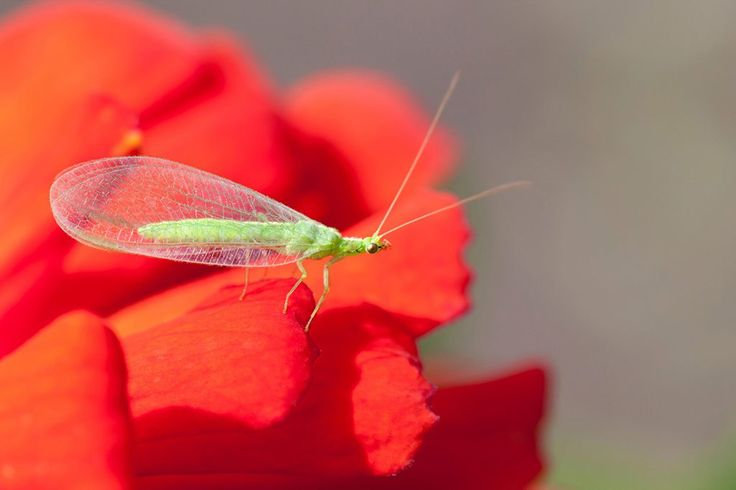 Get to Know Common Beneficial Insects - Bonnie Plants