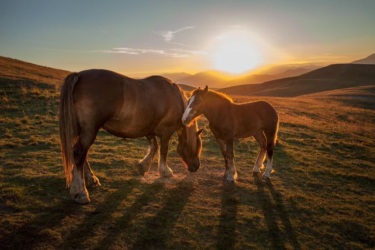 """Wild Horses - by Stefano Buttafoco (""""This picture is very important to me. The place is """"Campo Imperatore"""" in a Gran Sasso and Monti della Laga National Park, in Abruzzo, Italy. The two horses, mother and son, are in a silent and calm sunset atmosphere. The name of the pictures is """"Wild Horses"""" my best song of the rock Band Rolling Stones"""")"""
