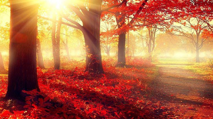 Beautiful Romantic Music: Relaxing Music, Piano Music, Violin Music, Gui...