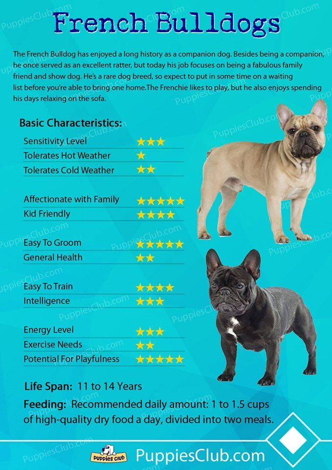 Best Dog Insurance >> French Bulldogs | French bulldog breed, French bulldog puppies, Bulldog breeds