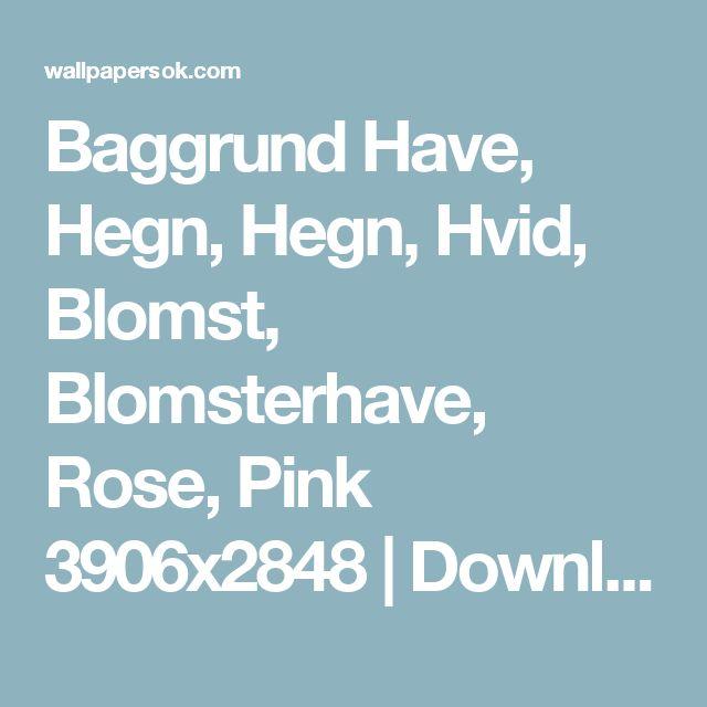 Baggrund Have, Hegn, Hegn, Hvid, Blomst, Blomsterhave, Rose, Pink 3906x2848 | Download baggrund gratis.Kun bedste, nye, widescreen tapet på dit skrivebord, telefon, tablet
