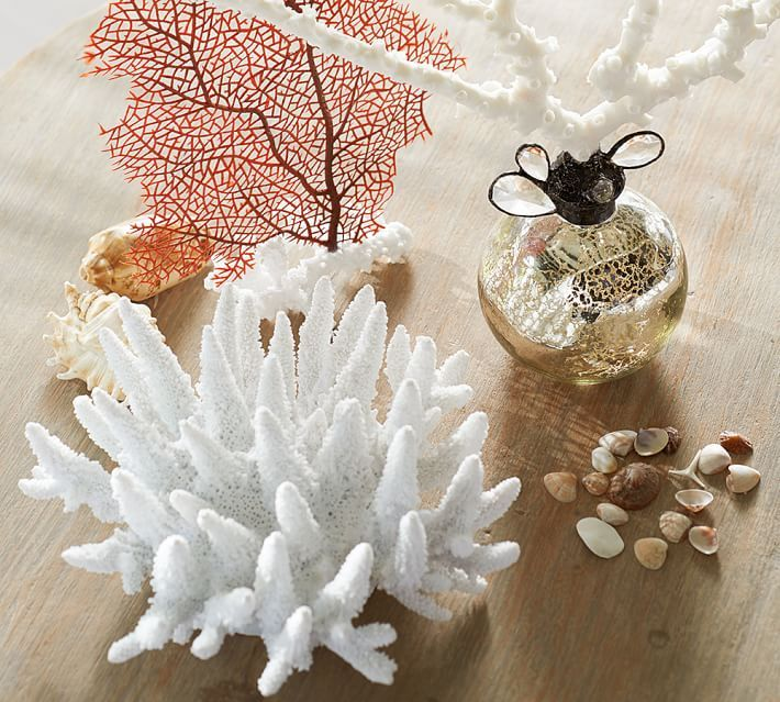 Image result for white coral for sale