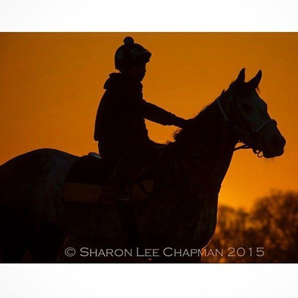 Stunning @fasttrackphoto pic taken at last year's #birdsvilleraces  #racehorse #sunset #Australia #outback #shadows #silhouette #horseracing #horse by yprsydney
