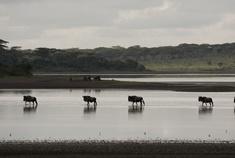 Passage To Africa - Lake Ndutu - Tanzania #Serengeti #Wildebeast