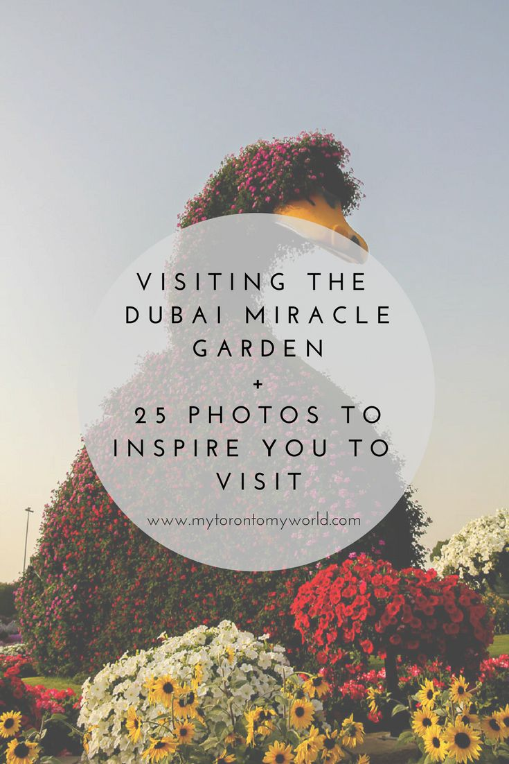 Visiting the Dubai Miracle Garden + 25 Pictures That'll
