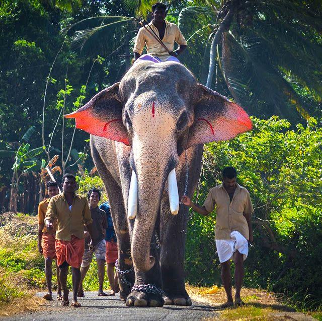 Thechikottukavu Ramachandran Hd Images Elephant Wallpaper