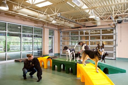 Photo gallery: Veterinary housing solutions to show cats and dogs the love