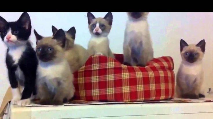 Funny Crazy Cats 2016 #16 | Смешные Сумасшедшие Кошки 2016 #16