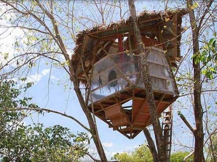 antique tree house resort oregon