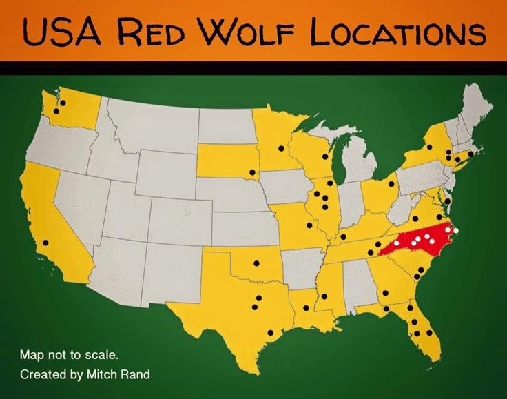 Best Red Wolves Images On Pinterest Red Wolves Animals And - Maps of the location of wolves in the us