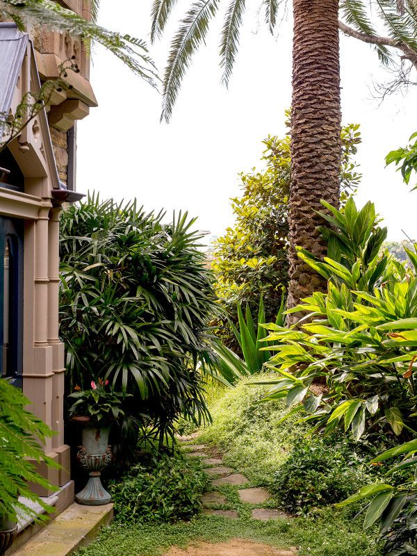 The pathway from the kitchen courtyard to the front of the home is framed by large lady palm (Rhaphis excels) on the left and variegated ginger on the right (Alpinia zerumbet). Photo – Daniel Shipp for The Design Files.