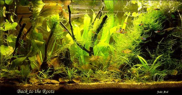 River Tank Amazon River Fish Tank Aquariums Fish Tank