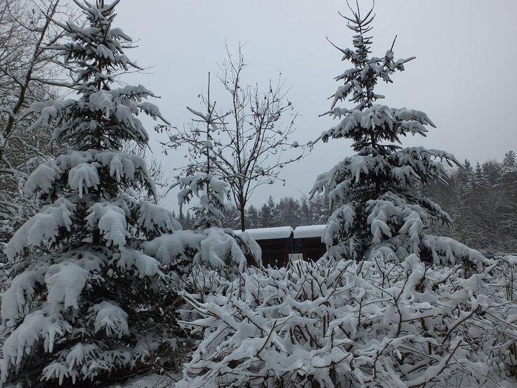 Новогодние елки. Зимний отдых в Германии.