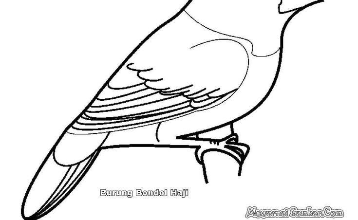Gambar Burung Hantu Hitam Putih Untuk Diwarnai Gambar Kartun Burung Hantu Buat Garskin Mewarnai Gambar Download Kole Ilustrasi Hewan Gambar Burung Sketsa