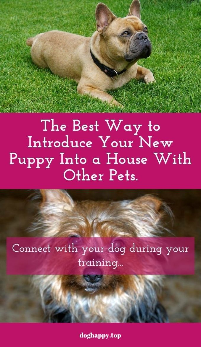 Dog Training Tips And Tricks You Can Use Dogs Dog Training Dog