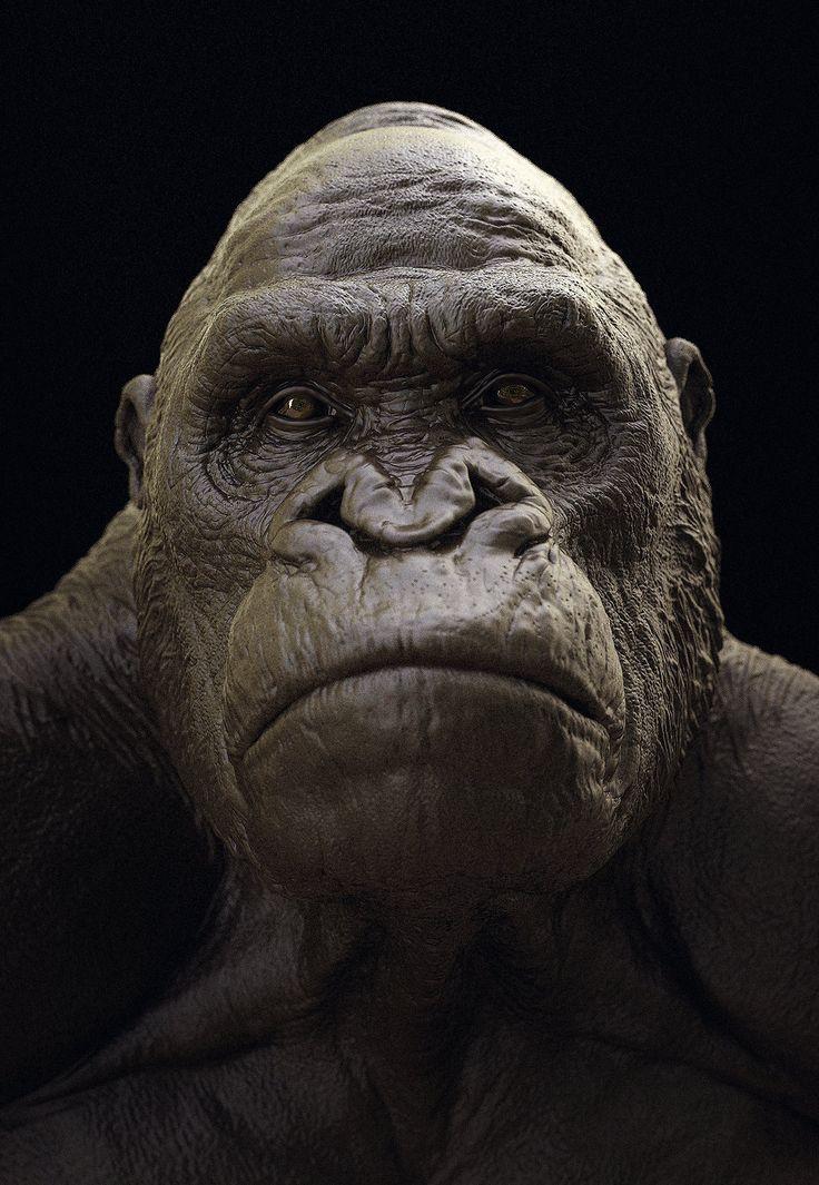 ArtStation - Gorilla study fast Keyshot renders, Maarten Verhoeven