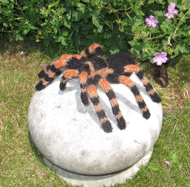 Pet tarantula on face - photo#23