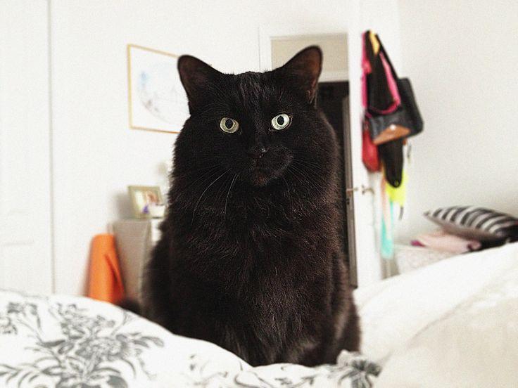 my black lucky cat