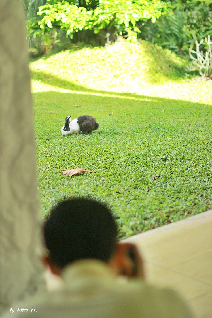 photos in the board were took from Thavorn Beach Village & Spa, Phuket, Thailand #kalim #kamala #patong #phuket #thailand #holiday #vacation #thavornbeachvillageandspa #rabbit