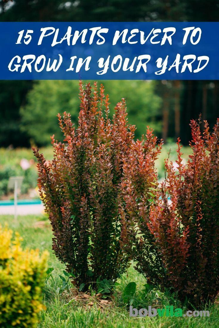 Pin On Lawn Garden Bob Vila S Picks