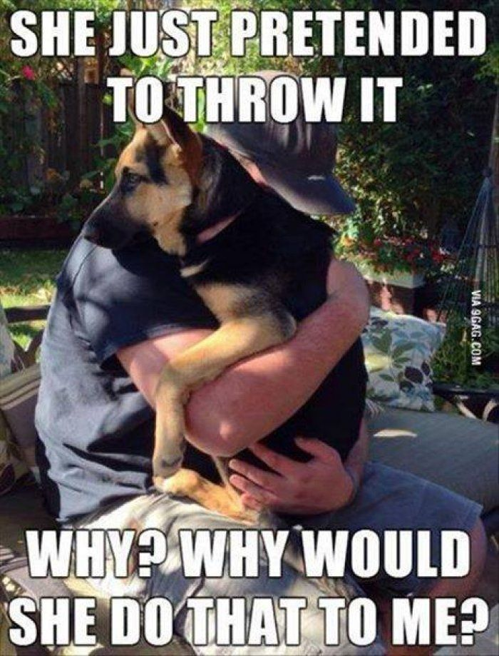Very Good Morning In German : Best images about funny dogs on pinterest pets