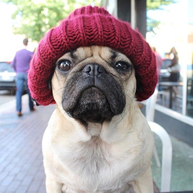 "itsdougthepug: ""She forgot the bacon. She's not getting a tip."" -Doug"