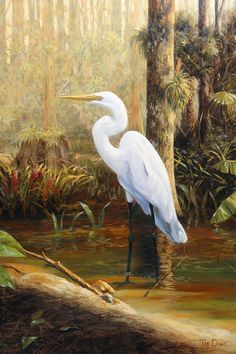 Great Painting - In The Shallows by Tim Davis