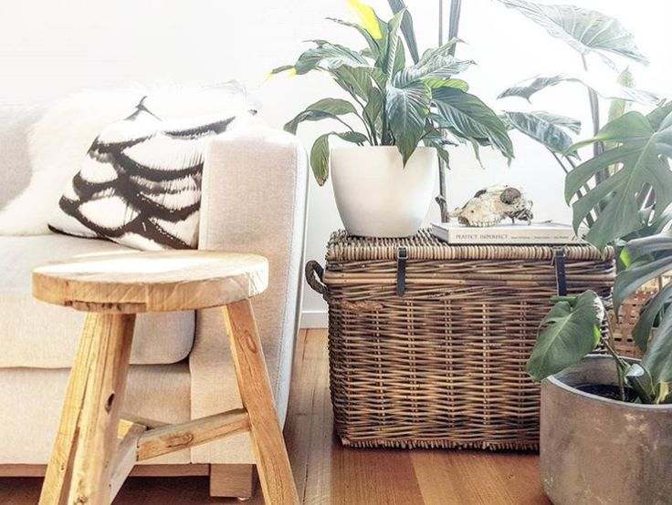 Greenery and our popular Vintage Rattan Storage Trunk via @zaabre