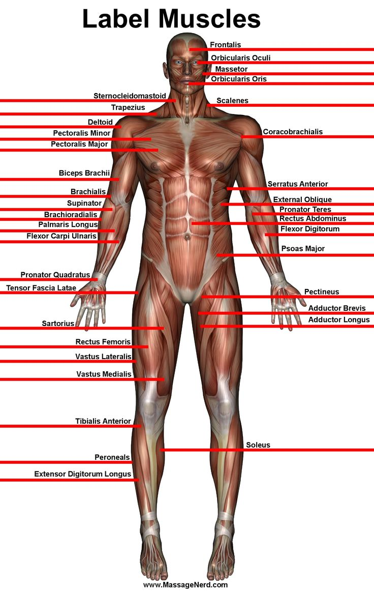 385 best muscles in fitness images on pinterest | health fitness, Muscles