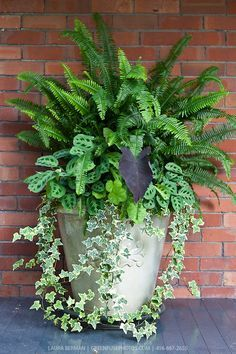 Ivy, ferns and other tropical plants in a tall white stone pot against a red brick wall.