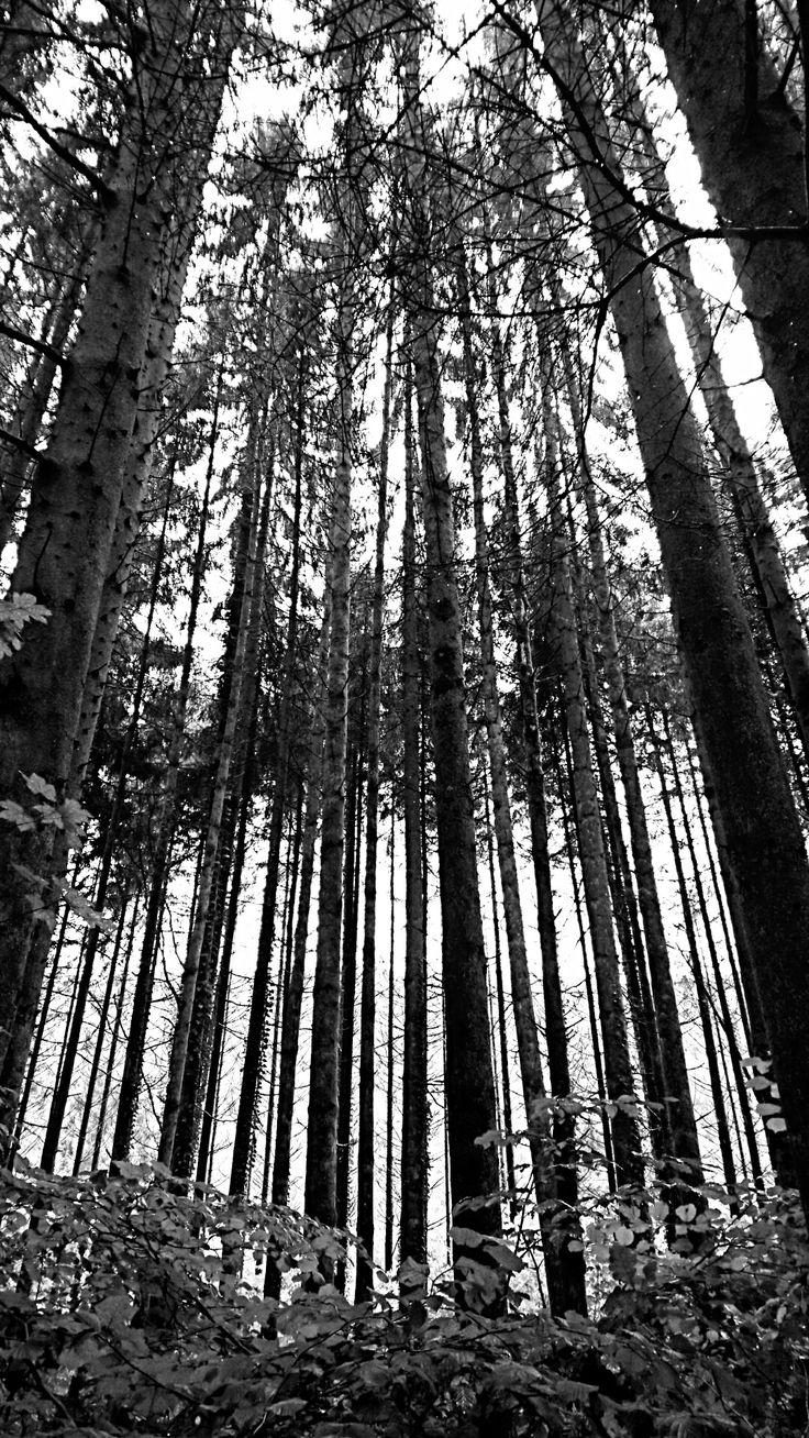 Ardennen #Ardennen