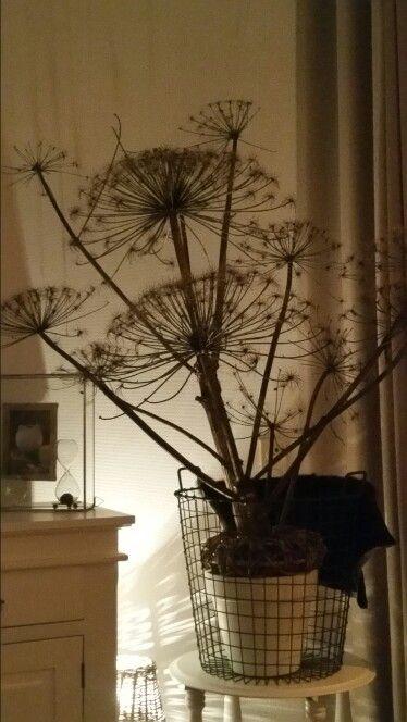 #bereklauw# decoratie
