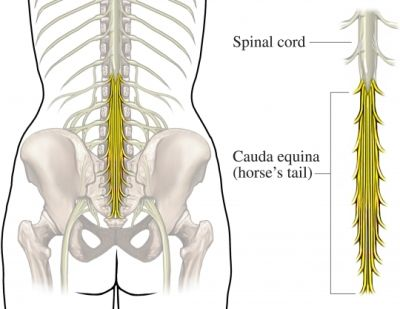10 best human skeleton images on pinterest   human skeleton, human, Skeleton