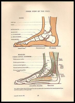 25 best ideas about foot anatomy on pinterest human anatomy for artists anatomy drawing and. Black Bedroom Furniture Sets. Home Design Ideas