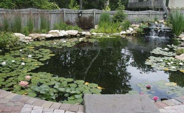 17 best images about pacific ponds design on pinterest for Large pond design ideas